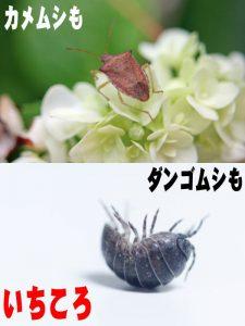 我が家防衛軍_蜘蛛クモキラー部隊_300mlスプレー